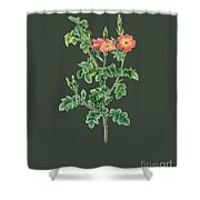 Rose124 Shower Curtain