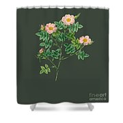 Rose132 Shower Curtain