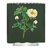 Rose142 Shower Curtain