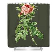 Rose144 Shower Curtain