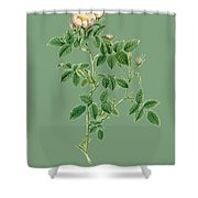 Rose148 Shower Curtain