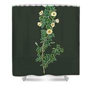 Rose157 Shower Curtain