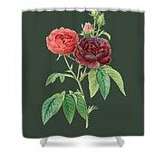 Rose64 Shower Curtain