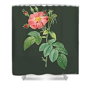 Rose71 Shower Curtain