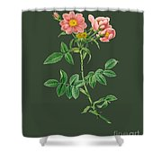 Rose73 Shower Curtain