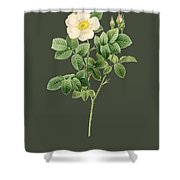Rose91 Shower Curtain