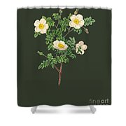 Rose99 Shower Curtain