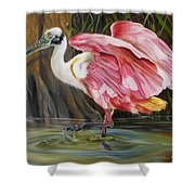 Roseate Spoonbill In A Cypress Swamp Shower Curtain
