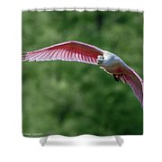 Roseate Spoonbill In Flight 2 Shower Curtain
