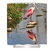 Roseate Spoonbill Reflections Shower Curtain