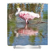 Roseate Spoonbill Young Adult Shower Curtain