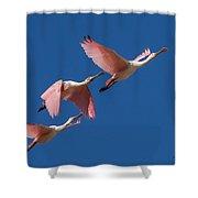 Roseate Trio Shower Curtain
