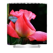 Rosebud And Dewdrops  Shower Curtain