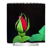 Rosebud Shower Curtain