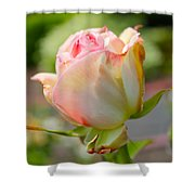 Rosebud Pale Pink Shower Curtain