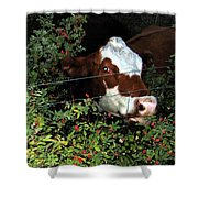 Rosehips For Dessert Shower Curtain