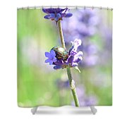 Rosemary And Lavender Shower Curtain