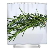 Rosemary Isolated On White Shower Curtain