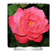 Roses 12 Shower Curtain