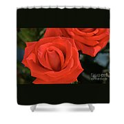 Roses-5814 Shower Curtain