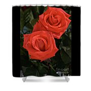 Roses-5840 Shower Curtain