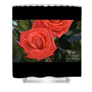 Roses-5850 Shower Curtain