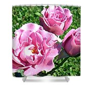 Roses 6 Shower Curtain