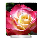 Roses 7 Shower Curtain