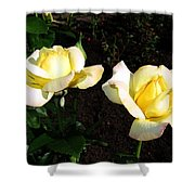 Roses 8 Shower Curtain