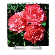 Roses 9 Shower Curtain