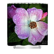 Roses After The Rain Shower Curtain