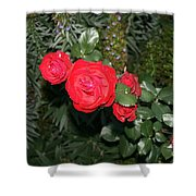 Roses Among Shower Curtain by Cynthia Marcopulos