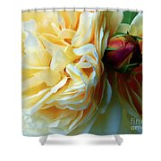 Roses And Bud Shower Curtain