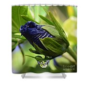 Rosebuds And Raindrops Shower Curtain