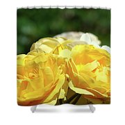 Roses Art Prints Canvas Sunlit Yellow Rose Flowers Baslee Troutman Shower Curtain