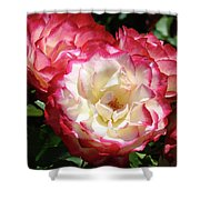 Roses Art Prints Pink White Rose Flowers Gifts Baslee Troutman Shower Curtain