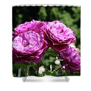 Roses Art Rose Garden Pink Purple Floral Prints Baslee Troutman Shower Curtain