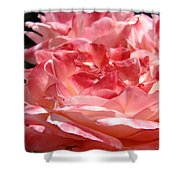 Roses Cinnamon Pink Rose Flowers 3 Rose Garden Art Baslee Troutman Shower Curtain
