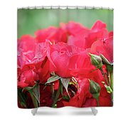 Roses Close Up Nature Spring Scene Shower Curtain