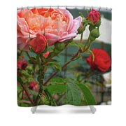 Roses Everywhere Shower Curtain