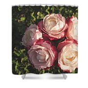 Roses In A Vase,on The Grass Shower Curtain