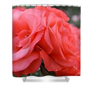 Roses In Dark Pink I Shower Curtain