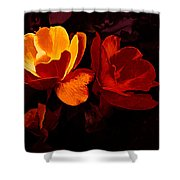 Roses In Molten Gold Art Shower Curtain
