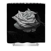 Roses In The Rain Shower Curtain