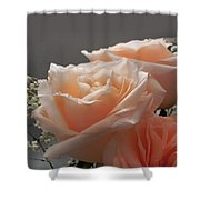 Roses Light Shower Curtain