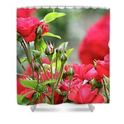 Roses Nature Spring Scene Shower Curtain