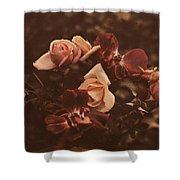 Roses Of Yesteryear Shower Curtain