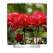 Roses On A Sunny Day Shower Curtain