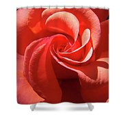Roses Orange Rose Flower Spiral Artwork 4 Rose Garden Baslee Troutman Shower Curtain