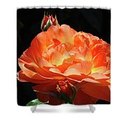 Roses Orange Rose Flowers Rose Garden Art Baslee Troutman Shower Curtain